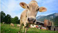 Jesús Caro reclama medidas para proteger el sector lácteo