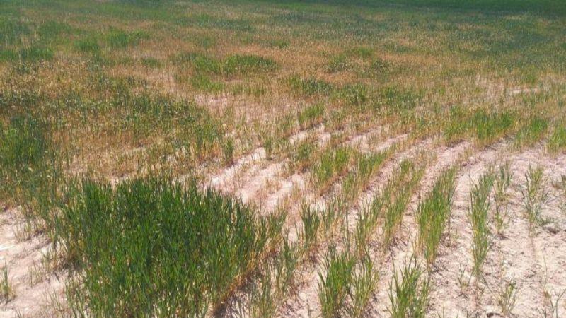 """IU-Equo reivindica medidas """"radicales y efectivas"""" para hacer frente a la sequía"""