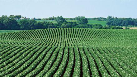 Agricultura y Ganadería triplica su apoyo a la suscripción de seguros agrarios en Castilla y León