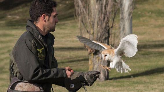 Día de las Aves 2018 en Ávila