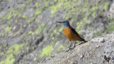 Más de veinte aficionados a las aves conocen las especies abulenses