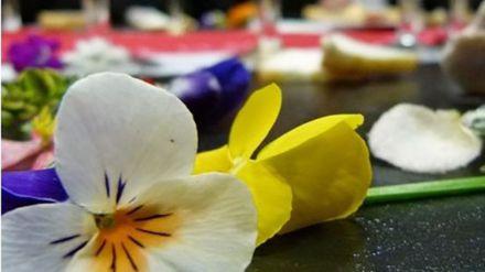 ¿Flores ornamentales comestibles? La investigación de la UCAV publicada en el proyecto europeo 'Espacio T3'