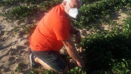 Por Ávila pide a la Junta y a la Diputación que actúen también contra los topillos