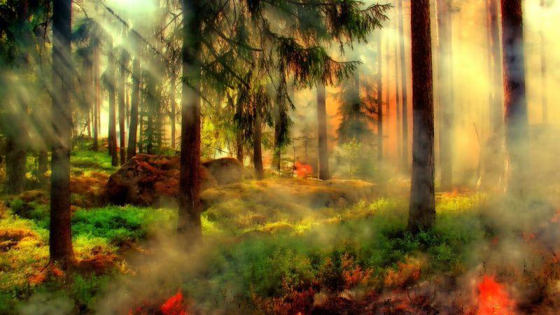 La Junta declara el peligro medio de incendios forestales en Castilla y León