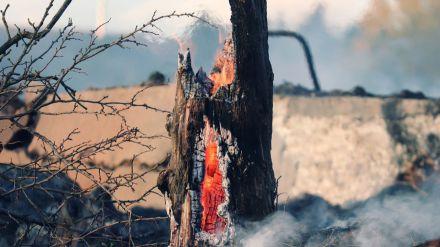 Alerta de riesgo de incendios forestales por causas meteorológicas del 21 al 23 de julio en toda Castilla y León