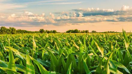 El Itacyl participa en el programa europeo Horizonte 2020 sobre la digitalización del sector agrario