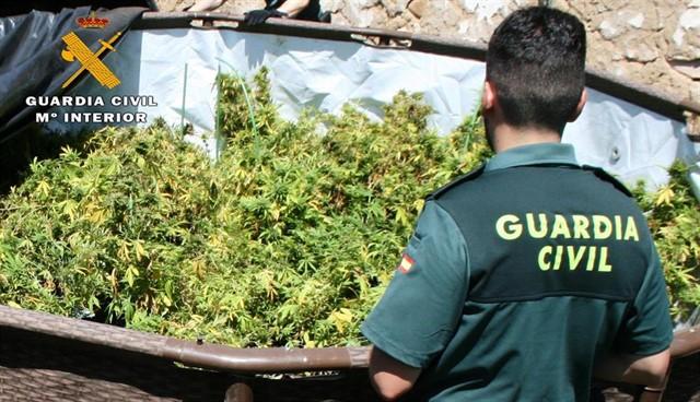 Incautadas 600 plantas de cannabis en Muñoyerro (Ávila)