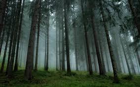Podemos ve en el sector forestal un 'importante nicho de generación de empleo'
